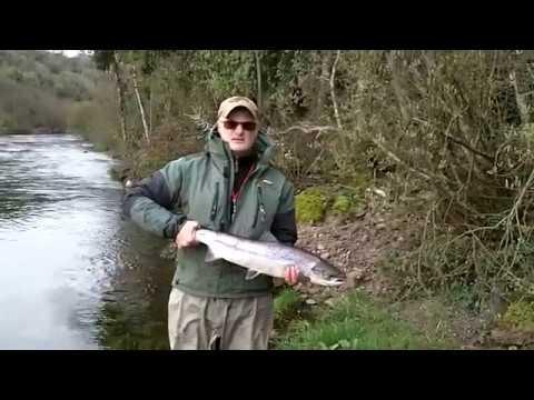 Salmon Worms 2019