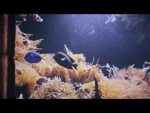 2016 Long Island Aquarium TV Commercial