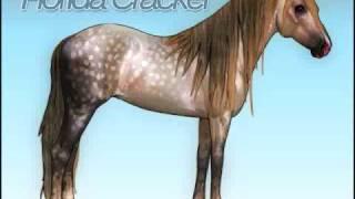 Horse Isle: Florida Cracker Drawing