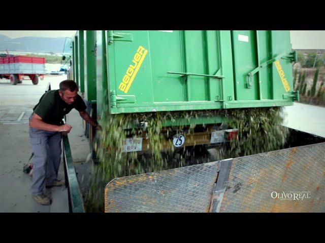 Olivo Real - Spot corto - Aceite temprano