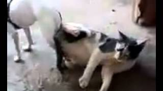 Download Video Dog fu*king a cat. *Warning adult content* MP3 3GP MP4
