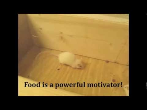 Mouse Entry Points - YouTube