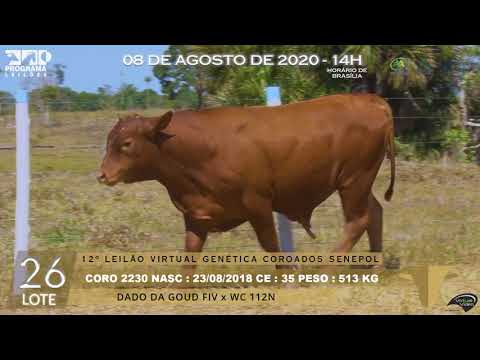 LOTE 26 CORO 2230