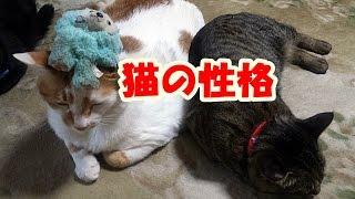 あらためましてゆずりん猫家族の紹介動画です。 ~~~~~~~~~~~...