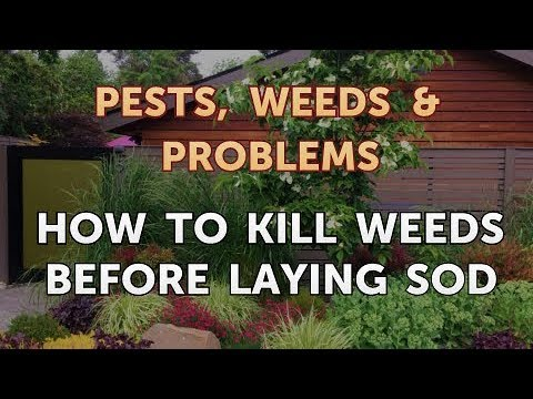 Weeds Before Laying Sod You
