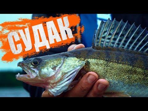Судак, практика поиска рыбы. Рыбалка с эхолотом. Ловля судака летом.