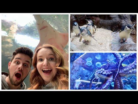 dallas-world-aquarium-vlog-2020---things-to-do-in-texas---travel-vlog