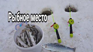 рыбалка На белом море зимой Рыбалка на корюха Нашел рыбное место