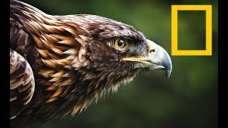 Mysterious Wildlife - Attack Speed and Defence In Animals (2018 Documentary)