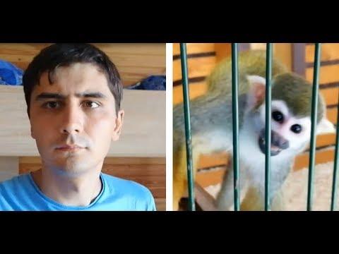 Макс Максимов переехал на море и пошел в зоопарк