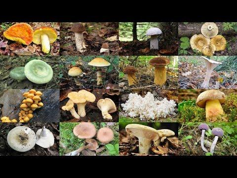 Редкие грибы из Красной книги Московской области