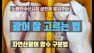 노량진수산시장 자연산 광어 암수 맛대맛