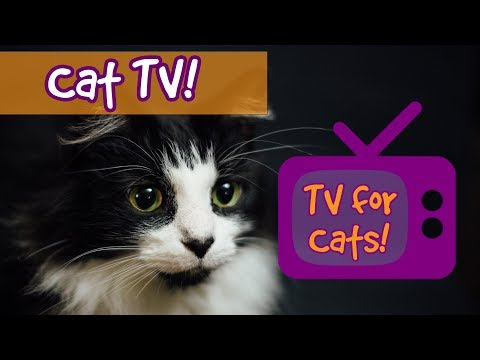 CAT TV! Movies for Cats to Watch, Videos for cats to watch, entertainment for cats to relax 🐱