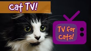 CAT TV! Movies for Cats to Watch, Videos for cats to watch, entertainment for cats to relax 🐱 thumbnail