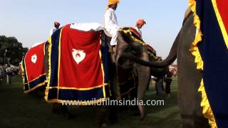 Decorated bullock cart and elephants at the procession, Jaipur