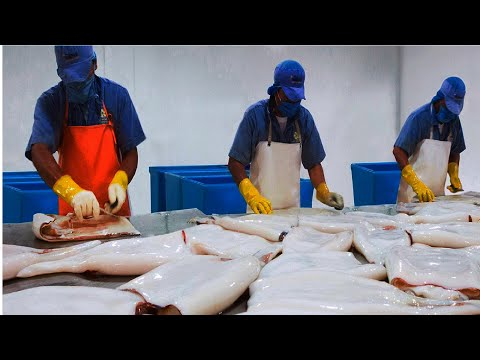 Squid Fishing Vessel - How Giant Squid process in Factory