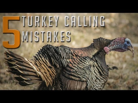 5 Turkey Calling Mistakes You Need To Avoid!!