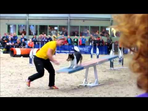 International sheltie agility competition 2015