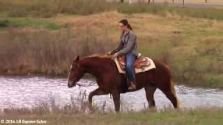 fine fancy feeling aqha western pleasure ranch riding prospect by stylish way to zip