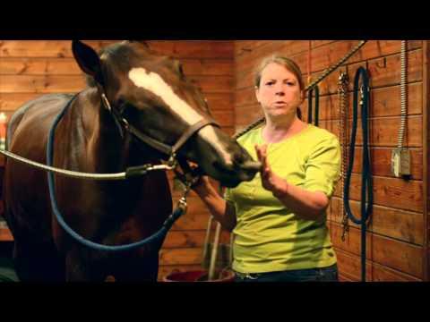 Vetiver Horse application - Joan Sorita