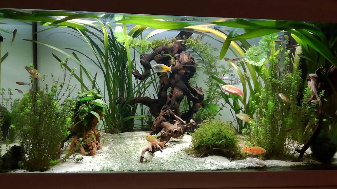 100l aquarium amazonas youtube. Black Bedroom Furniture Sets. Home Design Ideas