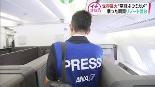 【HTBニュース】新千歳空港に「空飛ぶウミガメ」登場