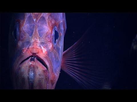 Deep Ocean Creatures