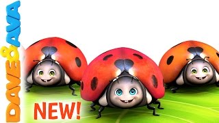 🌳 Five Little Ladybugs | New Nursery Rhyme from Dave and Ava 🌳