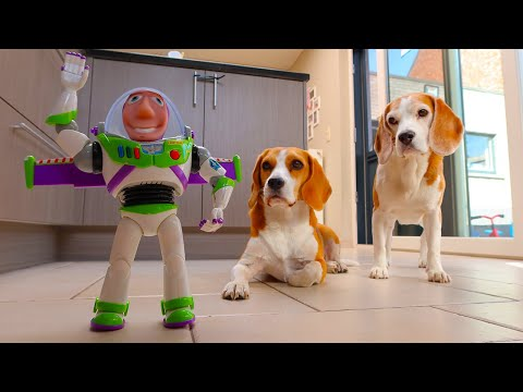 Cute Dog Pranked by Buzz Lightyear Doll : Funny Dog Marie