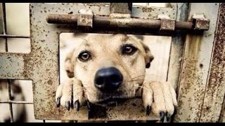 my thoughts on china s yulin dog meat festival