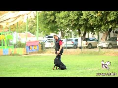 Bursa K9  --  Savaş Keskin & Mate Show --