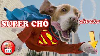 HÁ HỐC MỒM Với 3 Con Vật Có Siêu Năng Lực Bá Đạo HÀI HƯỚC Nhất | 3 Animals With Super Powers