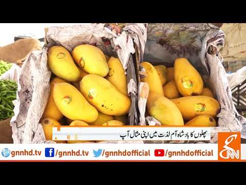Report on Mangoes - Watch Now And Enjoy With Mango News
