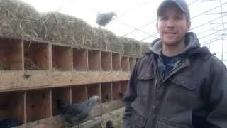 What Size Should Chicken Nest Boxes Be?