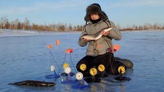 СРАБОТКА ЗА СРАБОТКОЙ Такого а ещё не видел Апрельская рыбалка на жерлицы 2021