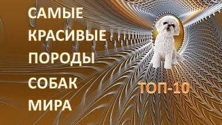 Топ-10 самых красивых пород собак мира