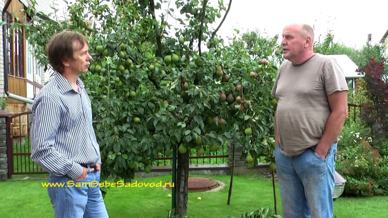 Шелковица (тутовое дерево) - YouTube