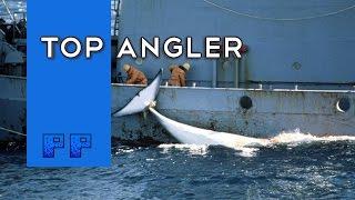 Top Angler -Plebeians Play-