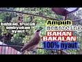 Suara Panggilan Burung Trucukan Gacor Ampuh Memancing Trucukan Bahan Bakalan Dan Trucukan Ombyokan  Mp3 - Mp4 Download