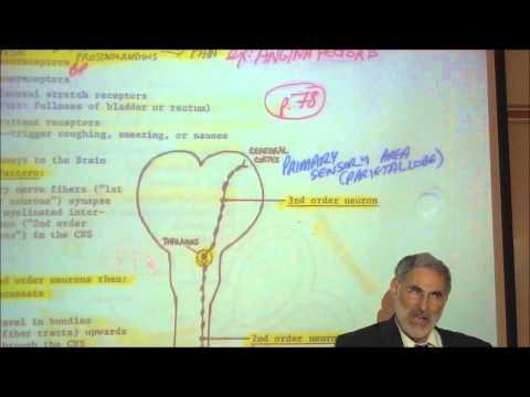 NEURAL PROCESSING OF SENSORY INFORMATION by Professor Fink