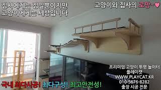 남양주 아파트 거실 - 플레이캣 고양이 투명 놀이터 원…