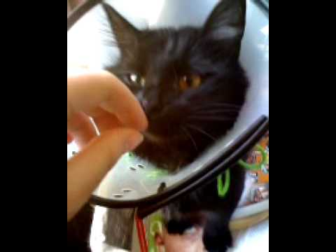 how to get a cat to drink water after surgery