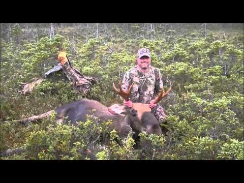 HIDEAWAY LODGE  Newfoundland Moose Hunting Outfitters