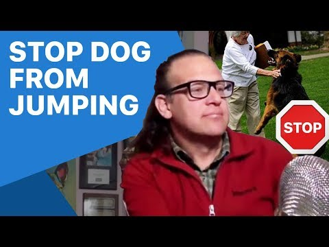 how-to-stop-a-jumping-dog,-dog-training-tips.-stopped-in-1-second.