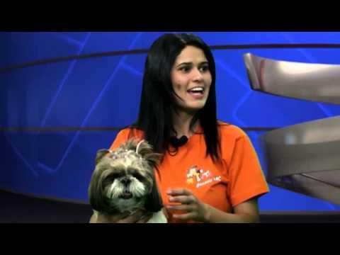 Dog Walker Marcella Freitas do Totó Passeia ABC fala sobre benefícios de passeios TV Berno