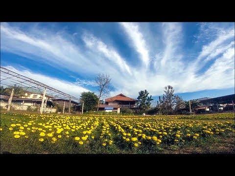 Marigold Garden Coffee Shop in a Garden ( agriculture farming ) - Thailand Travel