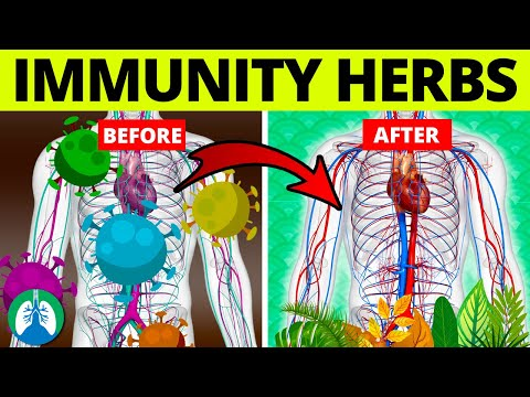Top 5 Herbs to Kill Viruses and Boost Your Immune System