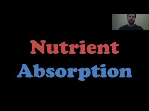 Nutrient Absorption