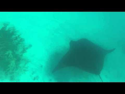Tuvalu Funafuti area Nage avec raies manta, Gopro / Tuvalu  Swimming with manta ray