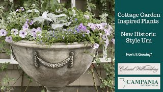 Cottage Garden Plants, Historic Style Urn  How's It Growing?